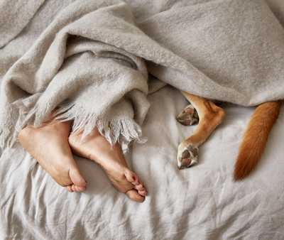 Human feet and dog paws under blanket